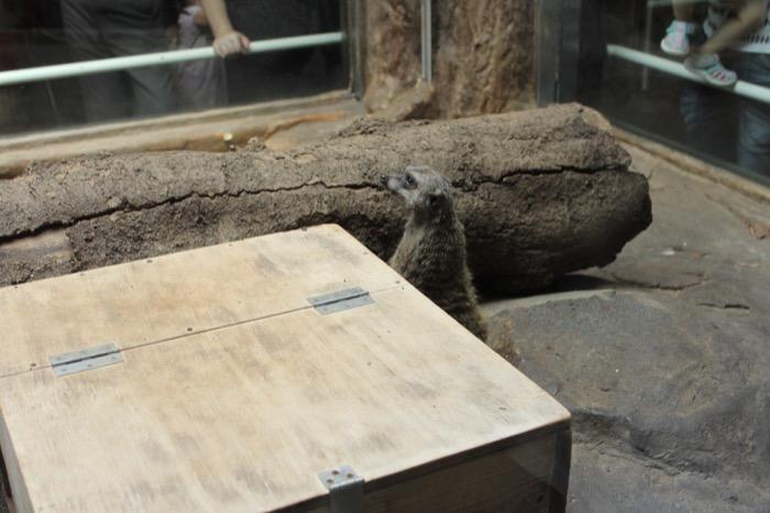 ベトナム人の妻と上野動物園へ!こんな都心のど真ん中に動物園があることに驚き!